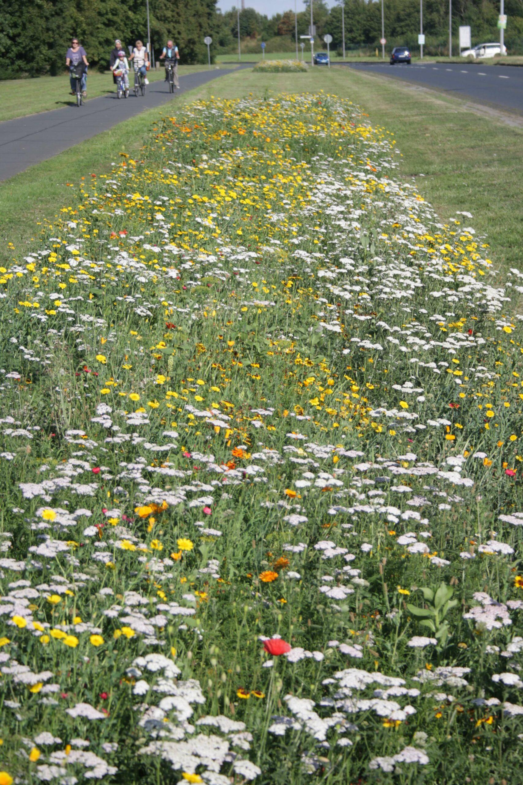 Blühstreifen am Straßenrand