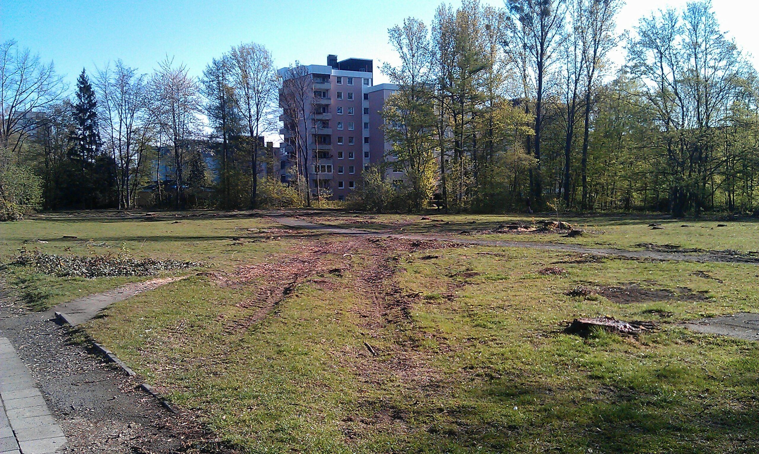 Abholzung Bürgerpark: Ratsfraktion lässt nicht locker
