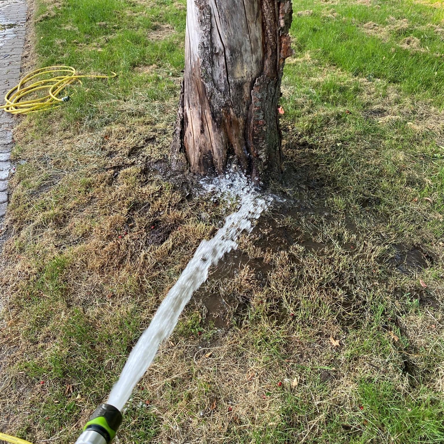 Auch die Straßenbäume haben Durst!